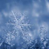Sneeuwvlok in vorst wordt geplakt die Stock Afbeeldingen