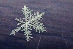 Sneeuwvlokdetail royalty-vrije stock foto's