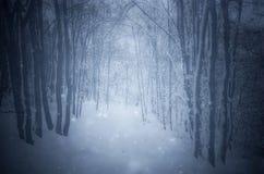 Sneeuwvlokken die in bevroren de winterbos vallen stock foto