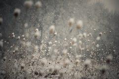 Sneeuwvlokken die in de winter vallen Royalty-vrije Stock Foto's