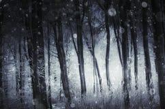 Sneeuwvlokken die in donker bos in de winter vallen stock foto's