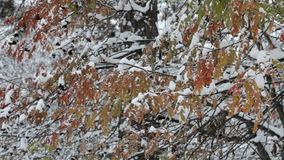 Sneeuwvlokken die, sneeuwval vallen De toneelherfst, de winterlandschap Bomen en Sneeuw stock footage