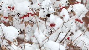 Sneeuwvlokken die, sneeuwval vallen Het toneel Landschap van de Winter Bomen en Sneeuw stock video