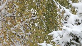 Sneeuwvlokken die, sneeuwval vallen Het toneel Landschap van de Winter Bomen en Sneeuw stock footage