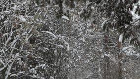 Sneeuwvlokken die, sneeuwval vallen Het toneel Landschap van de Winter Bomen en Sneeuw stock videobeelden