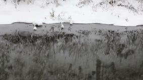 Sneeuwvlokken die, sneeuwval vallen Het toneel Landschap van de Winter Rivier stock videobeelden
