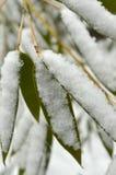 Sneeuwvlokken op groene bamboebladeren Royalty-vrije Stock Foto's