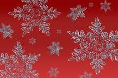 Sneeuwvlokken op rood Stock Afbeeldingen