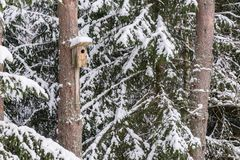 Sneeuwvogelhuis op een pijnboomboom Houten vogelhuis van hout Nestkastje in het bos, Stock Fotografie