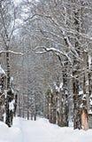 Sneeuwweg door het bos royalty-vrije stock afbeeldingen