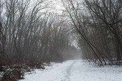 Sneeuwweg in het donkere mistige de winterbos Royalty-vrije Stock Afbeeldingen