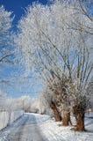 Sneeuwweg met bomen en elektrische lampen stock fotografie
