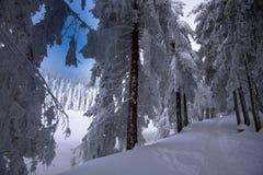 Sneeuwweg in Mummelsee in Duitsland stock afbeelding