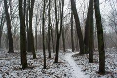 Sneeuwweg onder bomen in het donkere mistige de winterbos Royalty-vrije Stock Foto's
