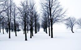 Sneeuwwoestijn met bomen, eenzaamheid en droefheid Stock Afbeeldingen