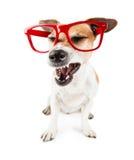 Sneezing pet Stock Photos
