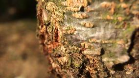 Snel bewegende mieren op boom stock videobeelden