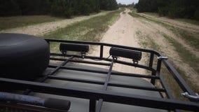 Snel drijvend door auto langs het zand langs een landweg in een zeldzaam pijnboombos stock videobeelden