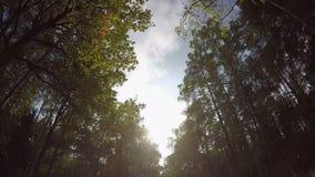 Snel drijvend door de herfst bosweg stock footage