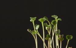 Snel het groeien spruiten Stock Foto's
