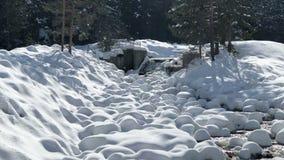 Snelle bergstroom onder de lente een dooi in het bos stock footage
