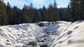 Snelle bergstroom onder de lente een dooi in het bos stock videobeelden