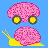 Snelle hersenen op wielen en langzame slakhersenen Stock Afbeeldingen