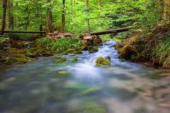 Snelle kreek die door bos vloeien Royalty-vrije Stock Foto