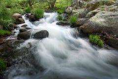 Snelle rivier die door rotsen in de zomerbos vloeien stock afbeelding