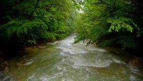 Snelle Rivier die neer in het Bos stromen stock videobeelden