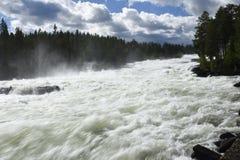 Snelle Storforsen in de rivier Piteälven, mening aan wij Royalty-vrije Stock Foto