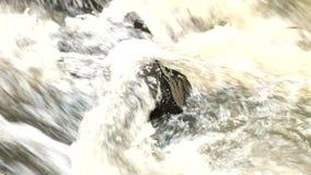 Snelle stroom met reusachtig van kristalwater Het hoogtepunt van de bergrivier van koud bronwater Pantoffelstenen en schuimend ko stock videobeelden