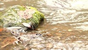 Snelle stroom met reusachtig van kristalwater Het hoogtepunt van de bergrivier van koud bronwater Pantoffelstenen en schuimend ko stock footage