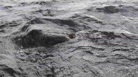 Snelle stroom van het hoogtepunt van de bergrivier van koud kristalwater grote steen en schuimend koel water rond waterstromen ro stock video