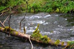Snelle taigarivier in noordelijke taiga Royalty-vrije Stock Fotografie