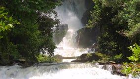 Snelle waterval in diepe wildernis stock footage