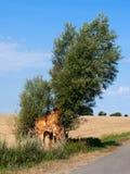 Snett träd Royaltyfri Foto
