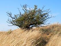 Snett träd Royaltyfri Fotografi