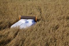 Säng i ett begrepp för kornfält av bra sömn Royaltyfri Bild