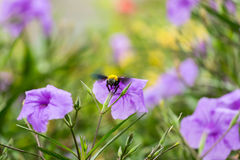Snickare Bee Royaltyfri Fotografi