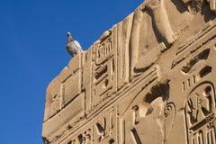 Snida på den Karnak templet Fotografering för Bildbyråer