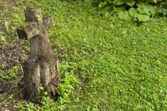 Sniden träallvarlig markör Royaltyfria Foton