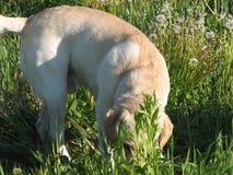 sniffa för 5 hund arkivfoto