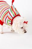 sniffa för hund Arkivfoto