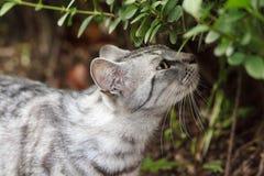 Sniffa katten Fotografering för Bildbyråer