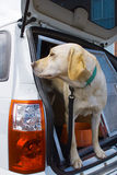 Sniffer Dog Royalty Free Stock Photography