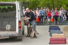 Sniffer dog show. SZEGED, HUNGARY - APRIL 26. 2015 - Excise officer (NAV) holds a presendation with a drug detection dog in the 'Earth day' event in Szeged Zoo Stock Images