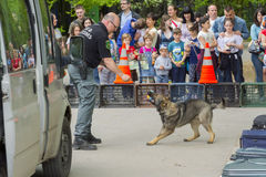 Sniffer dog show. SZEGED, HUNGARY - APRIL 26. 2015 - Excise officer (NAV) holds a presendation with a drug detection dog in the 'Earth day' event in Szeged Zoo Royalty Free Stock Photography