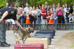 Sniffer dog show. SZEGED, HUNGARY - APRIL 26. 2015 - Excise officer (NAV) holds a presendation with a drug detection dog in the 'Earth day' event in Szeged Zoo Stock Photography