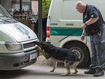 Sniffer dog show. SZEGED, HUNGARY - APRIL 26. 2015 - Excise officer (NAV) holds a presendation with a drug detection dog in the 'Earth day' event in Szeged Zoo Royalty Free Stock Photos